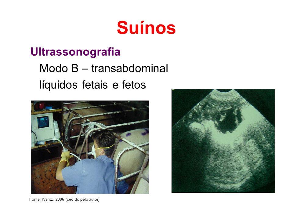 Suínos Ultrassonografia Modo B – transabdominal líquidos fetais e fetos Fonte: Wentz, 2006 (cedido pelo autor)