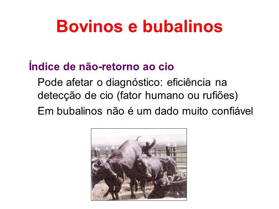 Bovinos e bubalinos Índice de não-retorno ao cio Pode afetar o diagnóstico: eficiência na detecção de cio (fator humano ou rufiões) Em bubalinos não é