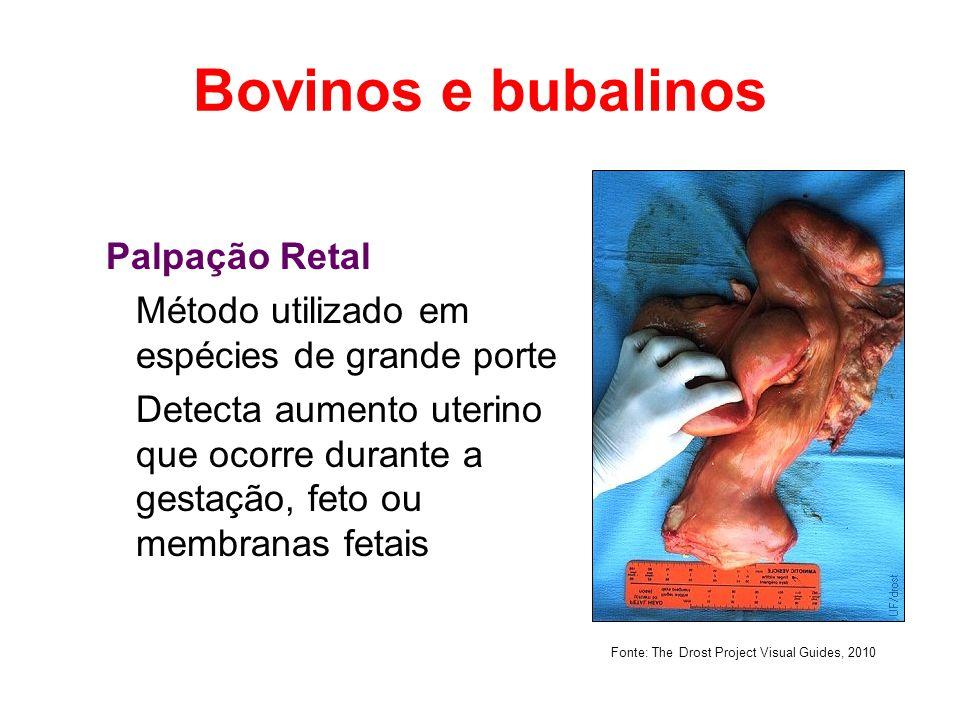 Equinos Palpação Retal 18 dias - assimetria dos cornos uterinos e contratilidade uterina e cervical aumentadas 2o mês - a assimetria aumenta; bolsa cório- alantóide se projeta ventralmente 3º mês – útero começa a descer