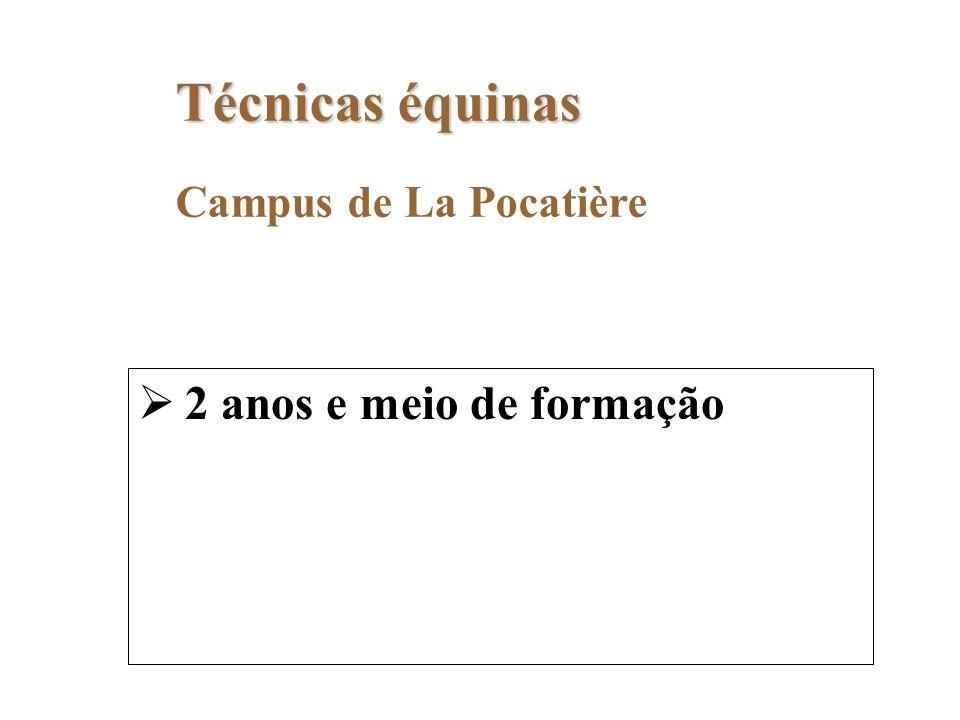 2 anos e meio de formação Técnicas équinas Campus de La Pocatière