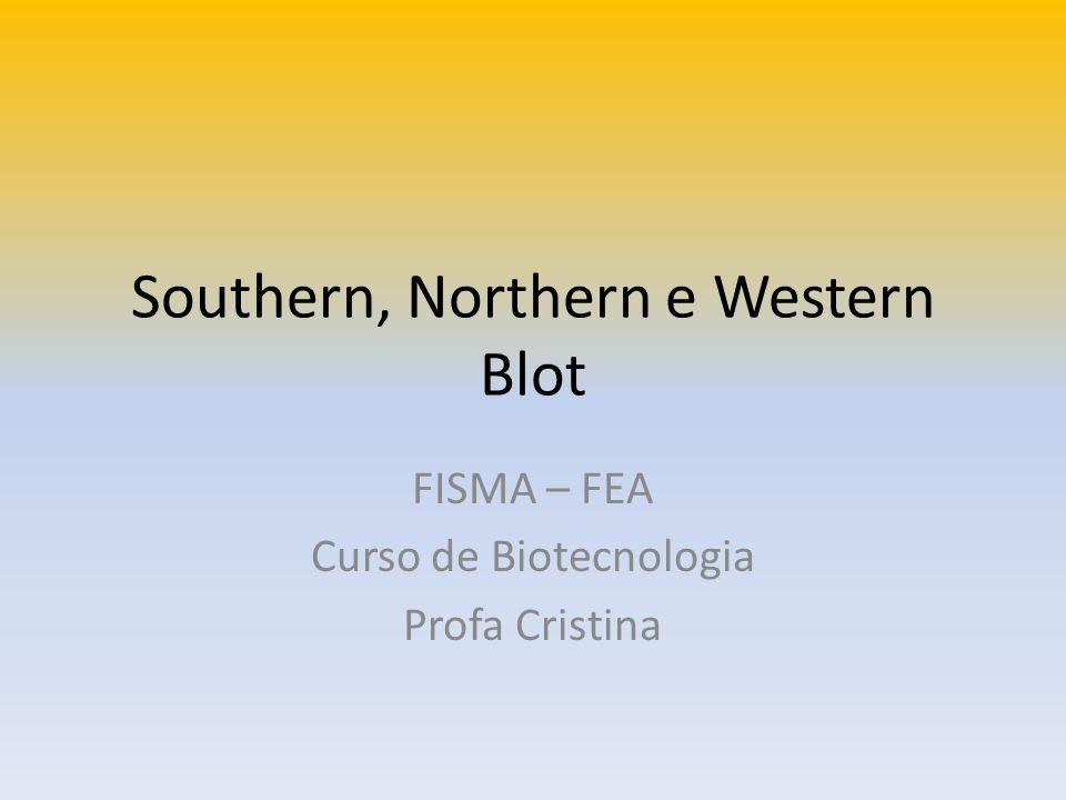 Southern, Northern e Western Blot FISMA – FEA Curso de Biotecnologia Profa Cristina