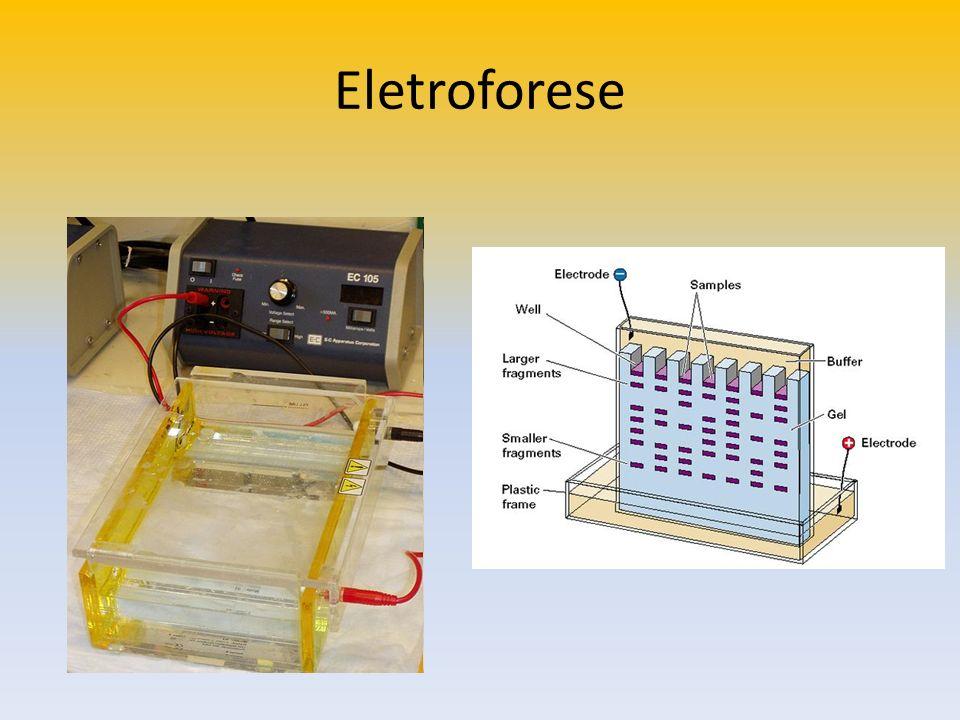 A eletroforese em gel é uma das principais ferramentas de trabalho em Biologia Molecular.
