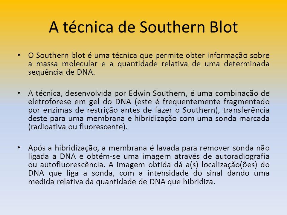 A técnica de Southern Blot O Southern blot é uma técnica que permite obter informação sobre a massa molecular e a quantidade relativa de uma determina