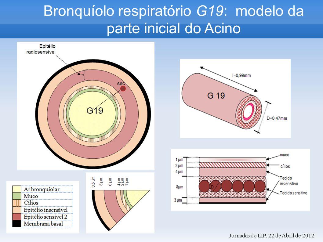 Bronquíolo respiratório G19: modelo da parte inicial do Acino Jornadas do LIP, 22 de Abril de 2012