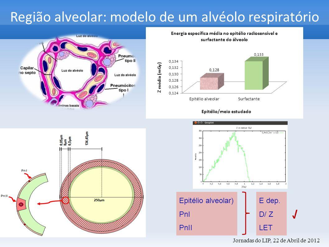 Região alveolar: modelo de um alvéolo respiratório Epitélio alveolar) PnI PnII E dep. D/ Z LET Jornadas do LIP, 22 de Abril de 2012