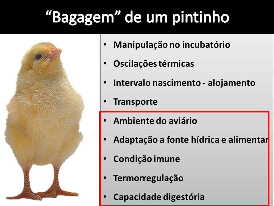 Manipulação no incubatório Oscilações térmicas Intervalo nascimento - alojamento Transporte Ambiente do aviário Adaptação a fonte hídrica e alimentar