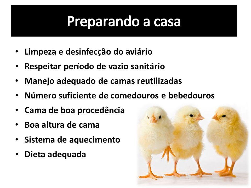 Limpeza e desinfecção do aviário Respeitar período de vazio sanitário Manejo adequado de camas reutilizadas Número suficiente de comedouros e bebedour