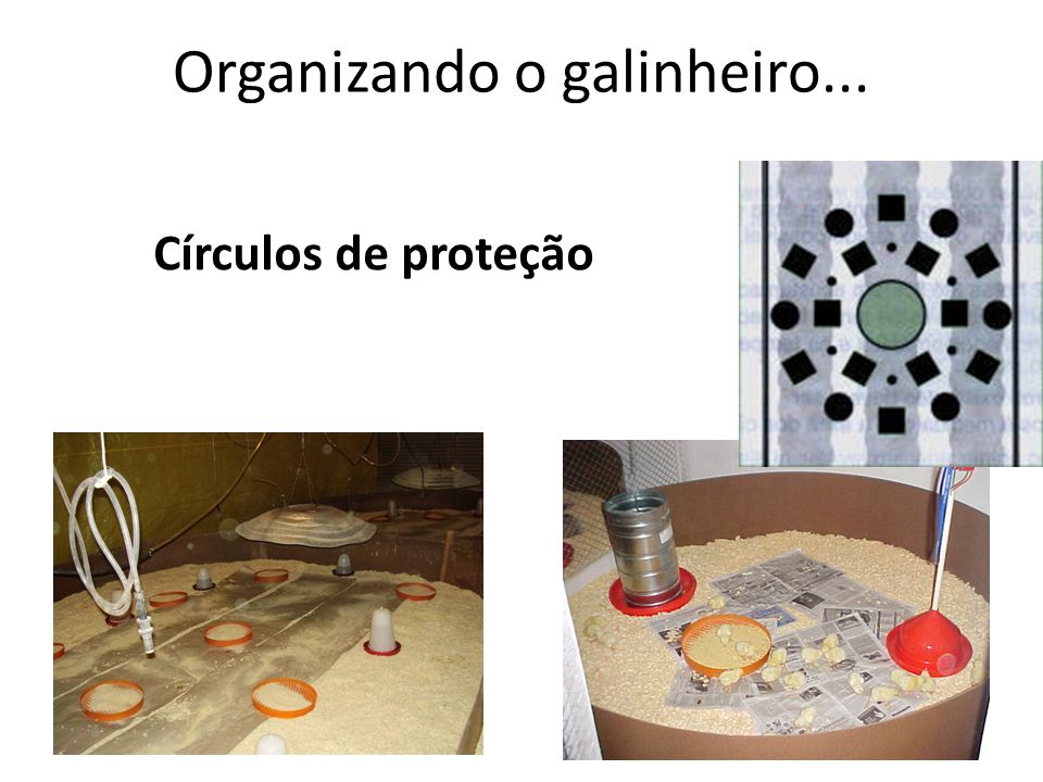 Organizando o galinheiro... Círculos de proteção