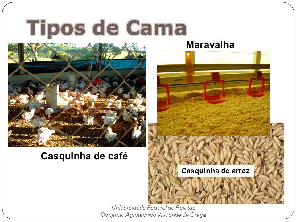 Universidade Federal de Pelotas Conjunto Agrotécnico Visconde da Graça Casquinha de café Casquinha de arroz Maravalha
