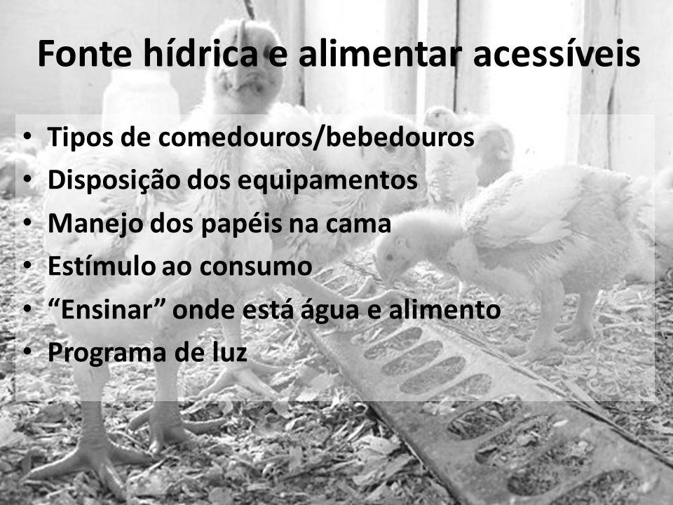 Fonte hídrica e alimentar acessíveis Tipos de comedouros/bebedouros Disposição dos equipamentos Manejo dos papéis na cama Estímulo ao consumo Ensinar