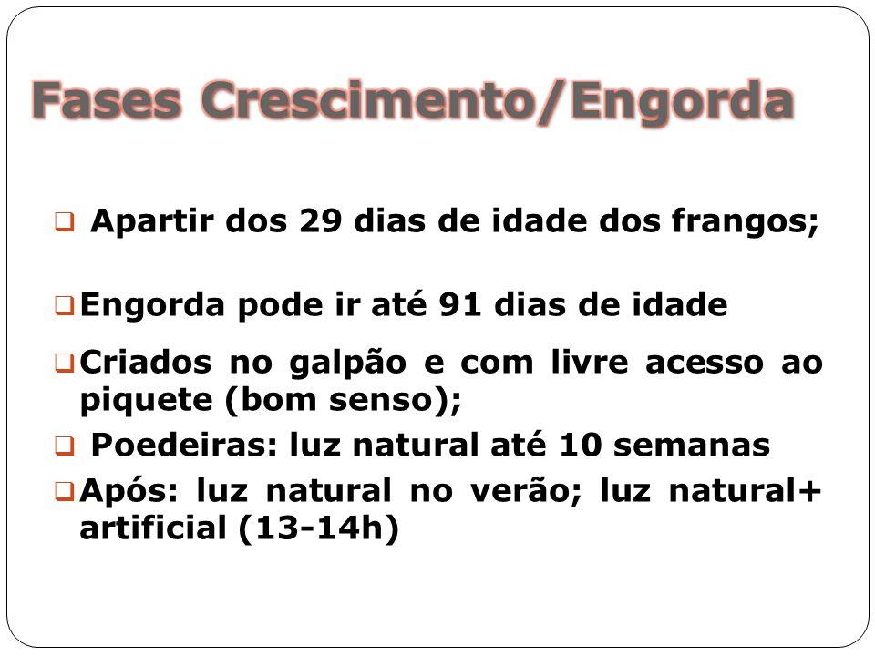 Apartir dos 29 dias de idade dos frangos; Engorda pode ir até 91 dias de idade Criados no galpão e com livre acesso ao piquete (bom senso); Poedeiras: