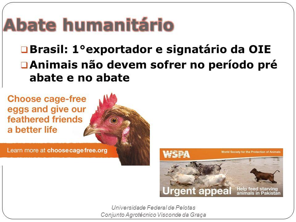 Brasil: 1°exportador e signatário da OIE Animais não devem sofrer no período pré abate e no abate Universidade Federal de Pelotas Conjunto Agrotécnico