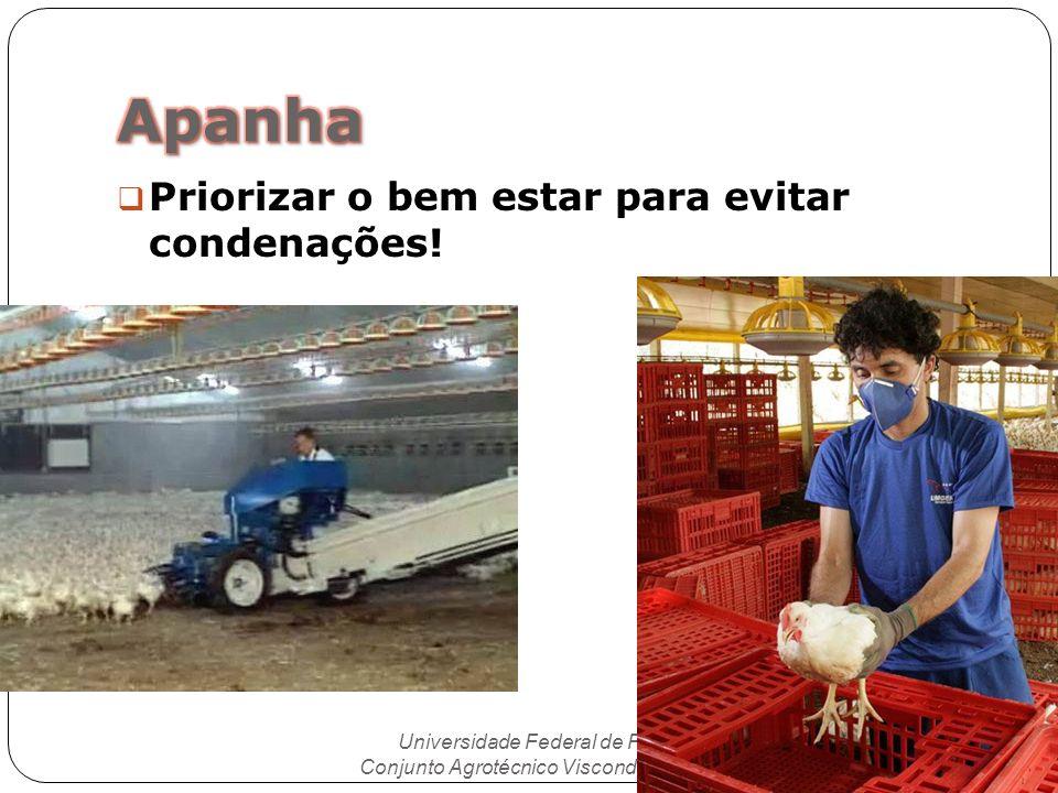 Priorizar o bem estar para evitar condenações! Universidade Federal de Pelotas Conjunto Agrotécnico Visconde da Graça