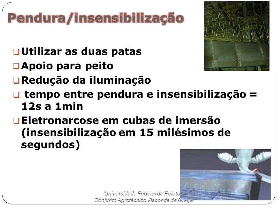 Utilizar as duas patas Apoio para peito Redução da iluminação tempo entre pendura e insensibilização = 12s a 1min Eletronarcose em cubas de imersão (i