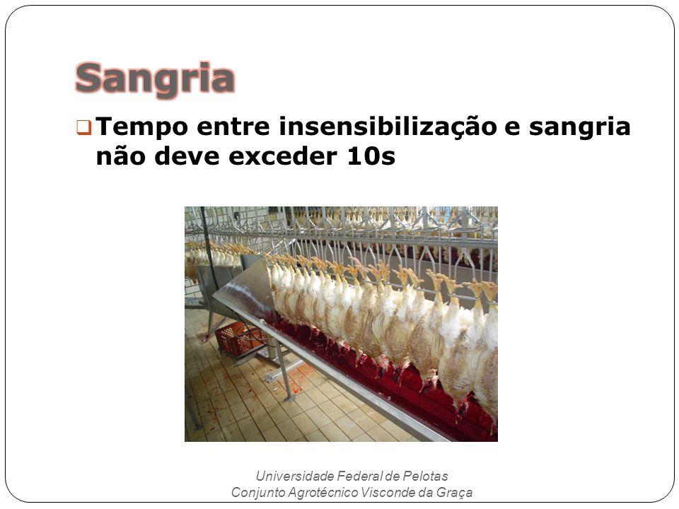 Tempo entre insensibilização e sangria não deve exceder 10s Universidade Federal de Pelotas Conjunto Agrotécnico Visconde da Graça