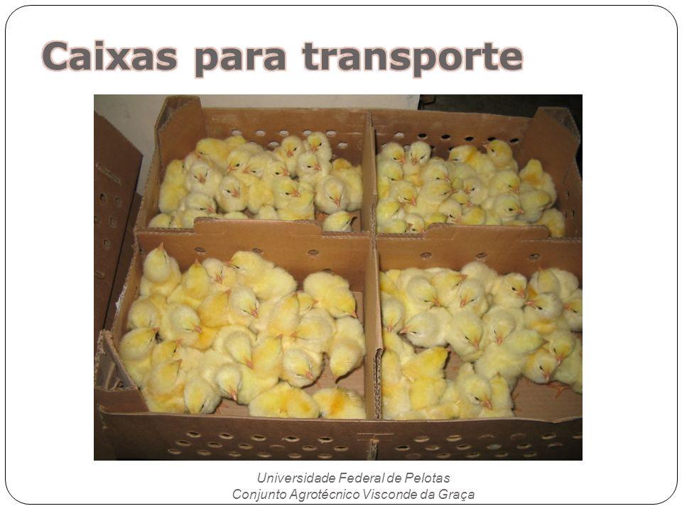 Universidade Federal de Pelotas Conjunto Agrotécnico Visconde da Graça