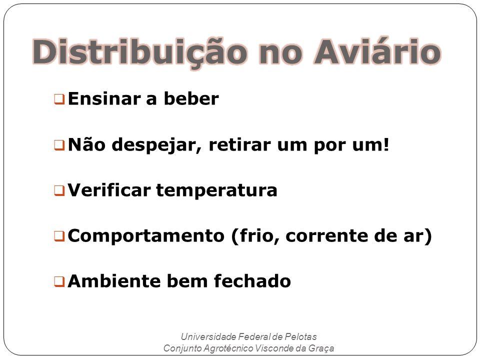 Universidade Federal de Pelotas Conjunto Agrotécnico Visconde da Graça Ensinar a beber Não despejar, retirar um por um! Verificar temperatura Comporta