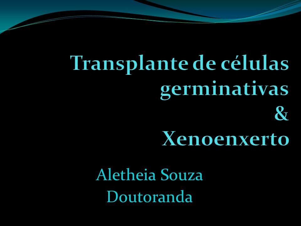 1 h após transplante: Espermatócitos primários em pre-leptoteno / leptoteno (PI) 11 dias após transplante: Espermatócitos primários em paquíteno (P) 22 dias após transplante: Espermátides alongadas (Sd)