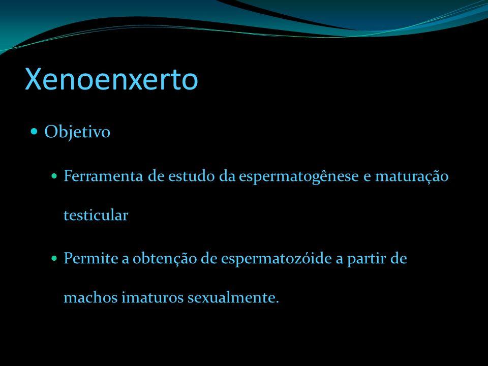 Xenoenxerto Objetivo Ferramenta de estudo da espermatogênese e maturação testicular Permite a obtenção de espermatozóide a partir de machos imaturos s
