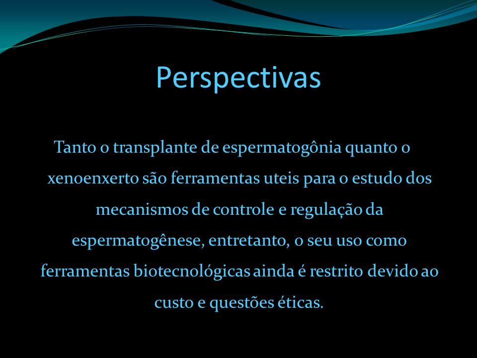Perspectivas Tanto o transplante de espermatogônia quanto o xenoenxerto são ferramentas uteis para o estudo dos mecanismos de controle e regulação da