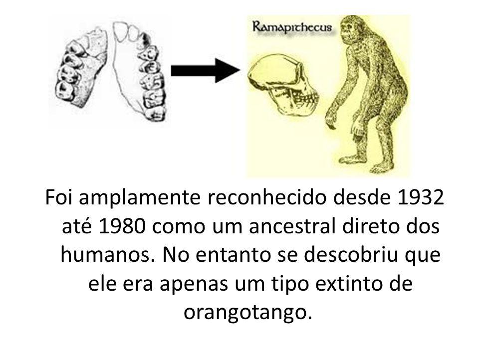 Foi amplamente reconhecido desde 1932 até 1980 como um ancestral direto dos humanos. No entanto se descobriu que ele era apenas um tipo extinto de ora