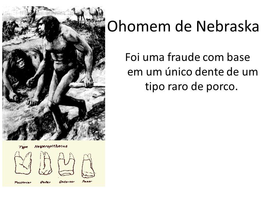Ohomem de Nebraska Foi uma fraude com base em um único dente de um tipo raro de porco.