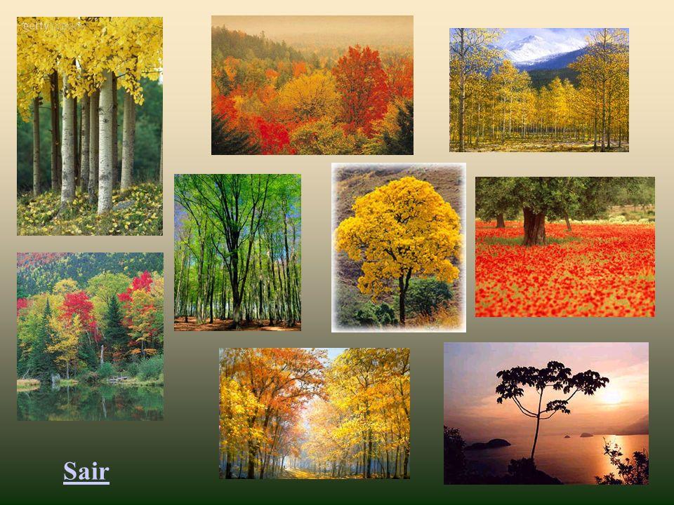 Escolha uma imagem de árvore, no slide seguinte, clique sobre ela e acolha o pensamento que ela lhe oferece!