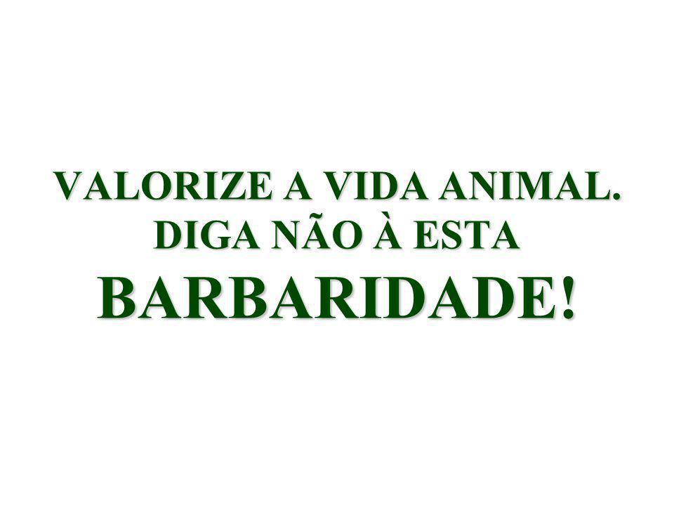 Profª Maria de Lourdes Pereira Dias - UNIVERSIDADE FEDERAL DE SANTA CATARINA - CSE/CNM - Campus Universitário - Trindade 88..040.900 - Florianópolis (SC) - B R A S I L Phone:(55- 0xx48) 3331-9483