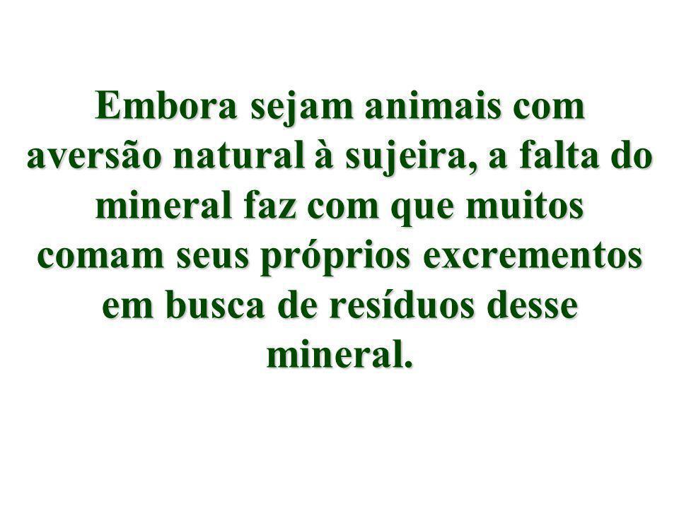 A falta de ferro é tão sentida pelos animais, que nada no estábulo pode ser feito de metal ferruginoso, pois eles entram em desespero para lamber esse tipo de material.