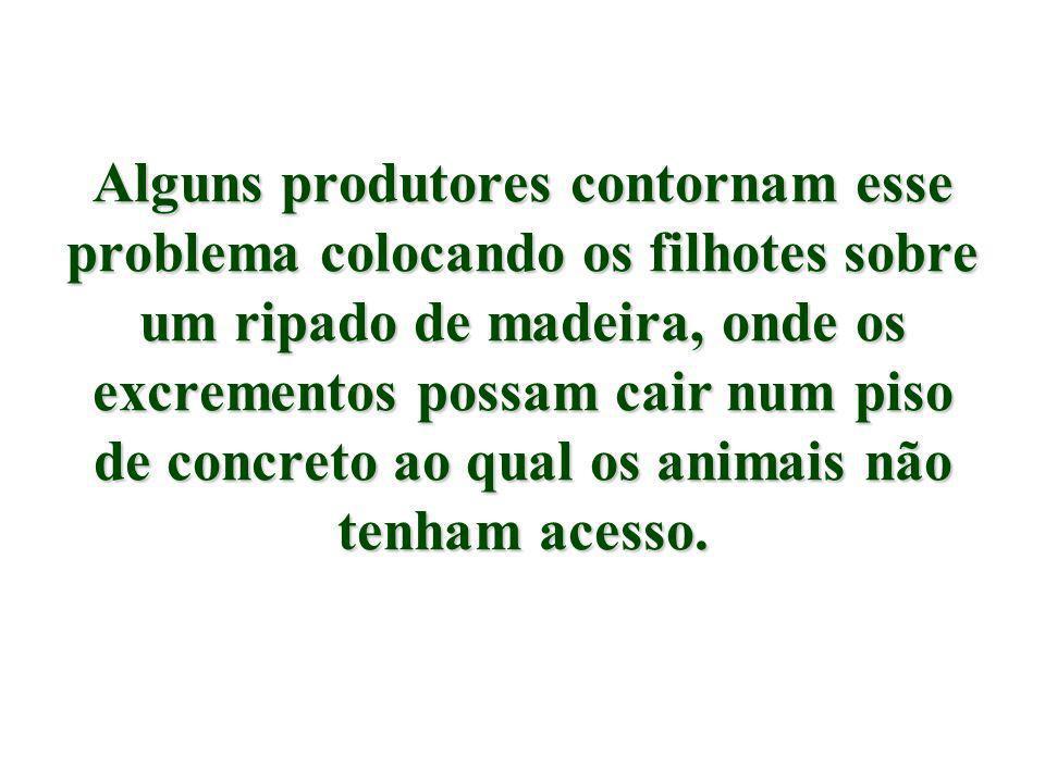 Embora sejam animais com aversão natural à sujeira, a falta do mineral faz com que muitos comam seus próprios excrementos em busca de resíduos desse mineral.