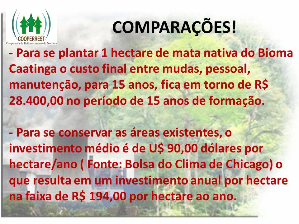 COMPARAÇÕES! - Para se plantar 1 hectare de mata nativa do Bioma Caatinga o custo final entre mudas, pessoal, manutenção, para 15 anos, fica em torno