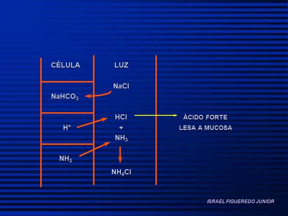 CÉLULA LUZ NaCl NaCl NaHCO 3 HCl ÁCIDO FORTE HCl ÁCIDO FORTE H + + LESA A MUCOSA H + + LESA A MUCOSA NH 3 NH 3 NH 4 Cl NH 4 Cl ISRAEL FIGUEREDO JUNIOR