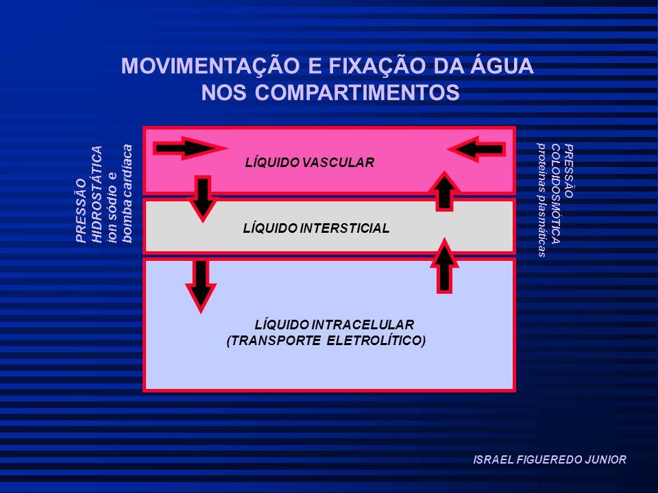 MOVIMENTAÇÃO E FIXAÇÃO DA ÁGUA NOS COMPARTIMENTOS LÍQUIDO VASCULAR LÍQUIDO INTERSTICIAL LÍQUIDO INTRACELULAR (TRANSPORTE ELETROLÍTICO) PRESSÃO HIDROSTÁTICA ion sódio e bomba cardíaca PRESSÃO COLOIDOSMÓTICA proteinas plasmáticas ISRAEL FIGUEREDO JUNIOR