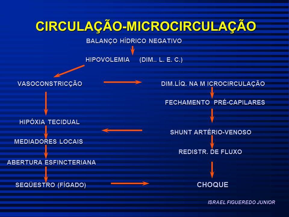 CIRCULAÇÃO-MICROCIRCULAÇÃO BALANÇO HÍDRICO NEGATIVO BALANÇO HÍDRICO NEGATIVO HIPOVOLEMIA (DIM.. L. E. C.) HIPOVOLEMIA (DIM.. L. E. C.) VASOCONSTRICÇÃO