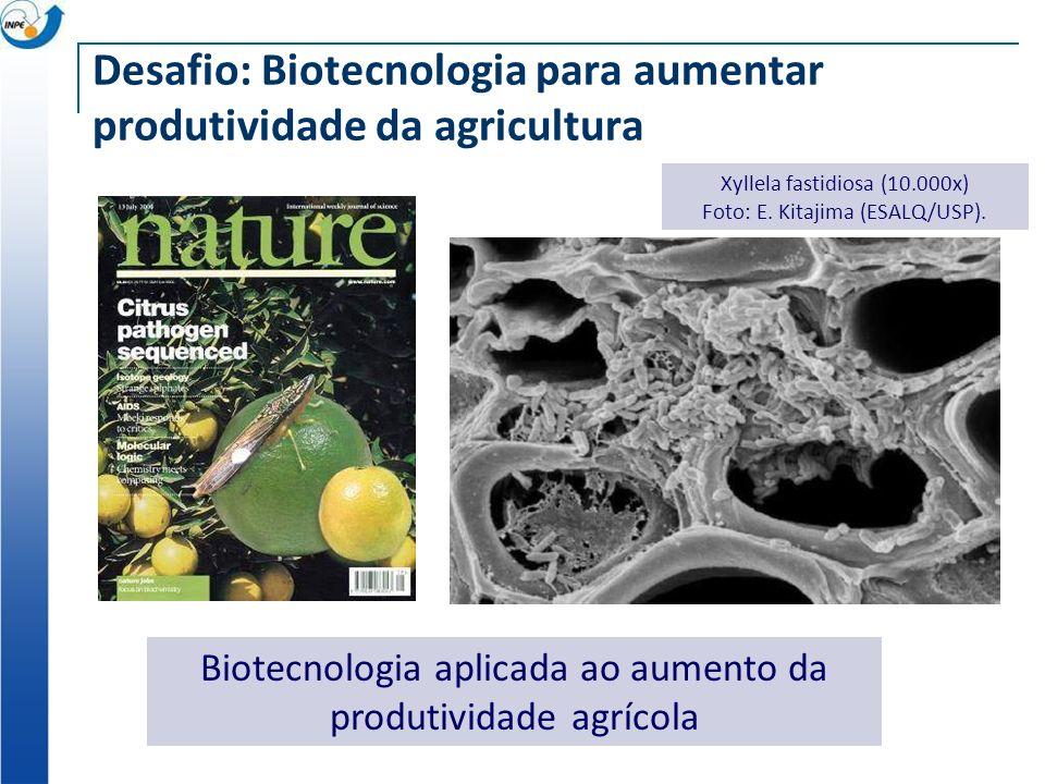 Desafio: Biotecnologia para aumentar produtividade da agricultura Xyllela fastidiosa (10.000x) Foto: E.