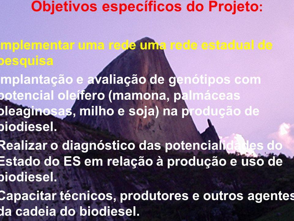 Objetivos específicos do Projeto : Implementar uma rede uma rede estadual de pesquisa Implantação e avaliação de genótipos com potencial oleífero (mam