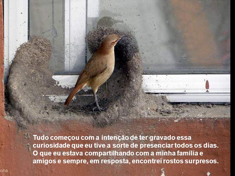 JOÃO-DE-BARRO Arquiteto sem diploma Vemos em muitos lugares ninhos do oleiro João-de- barro; mostro aqui essa peculiaridade num ninho que foi construí