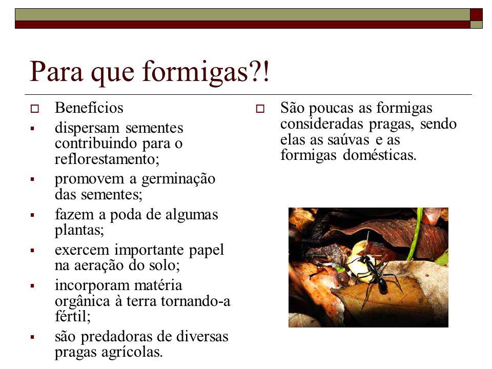 Para que formigas?! Benefícios dispersam sementes contribuindo para o reflorestamento; promovem a germinação das sementes; fazem a poda de algumas pla