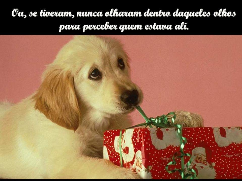 Que bom seria se todos os humanos pudessem ver a humanidade perfeita de um cão.