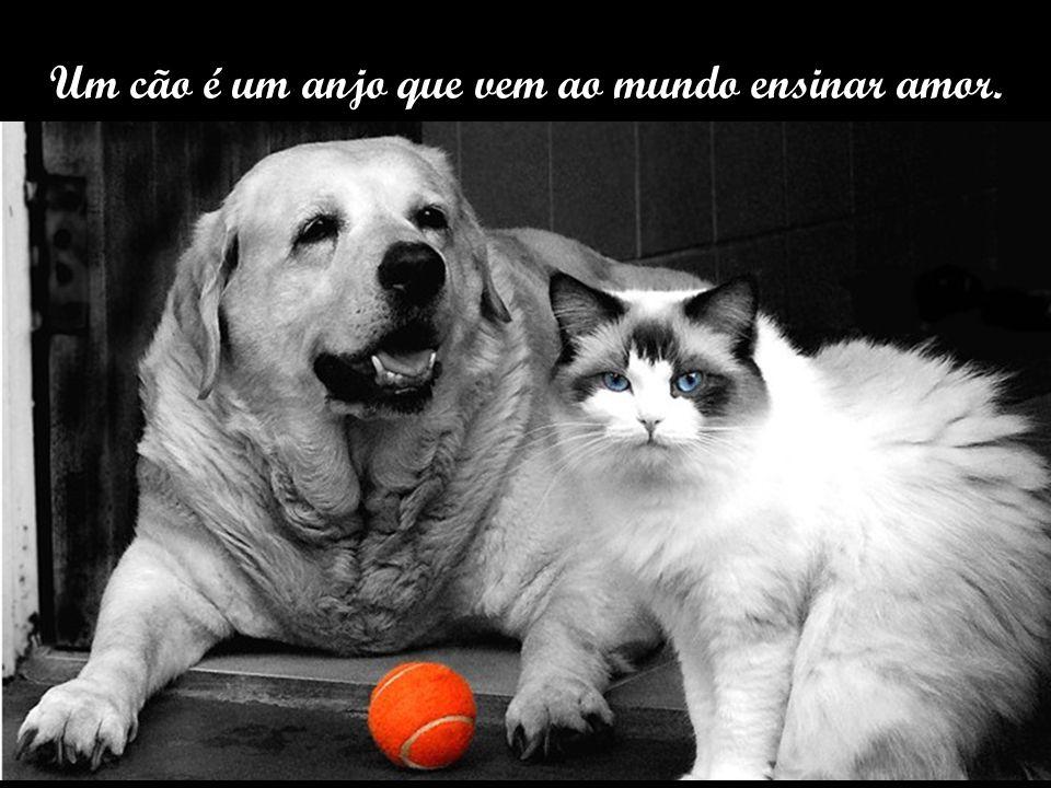 Um cão é um anjo que vem ao mundo ensinar amor.