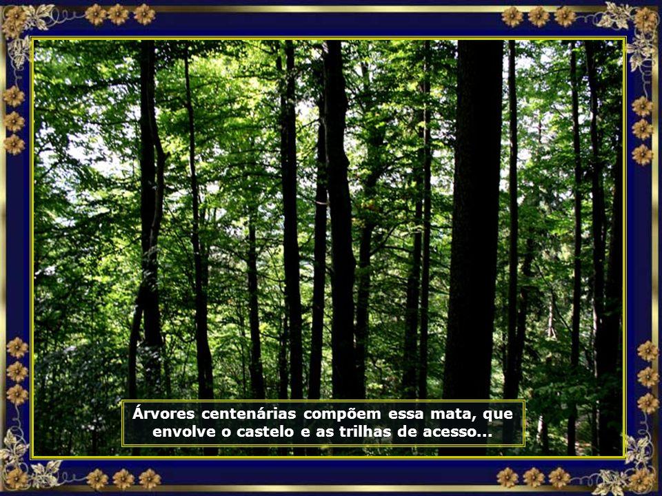 A trilha no meio de densa floresta nos leva ao alto da montanha onde ele se encontra...
