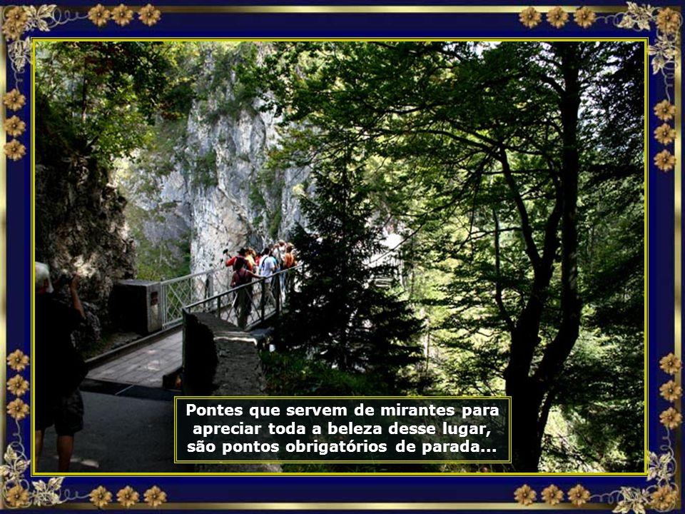 Árvores centenárias compõem essa mata, que envolve o castelo e as trilhas de acesso...