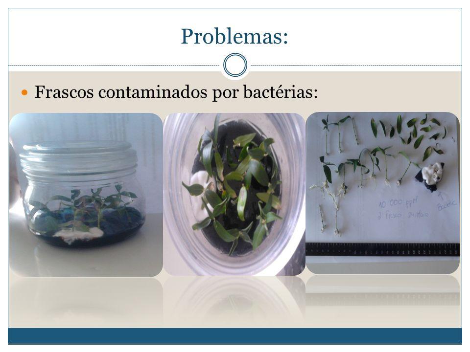 Frascos contaminados por bactérias: Problemas: