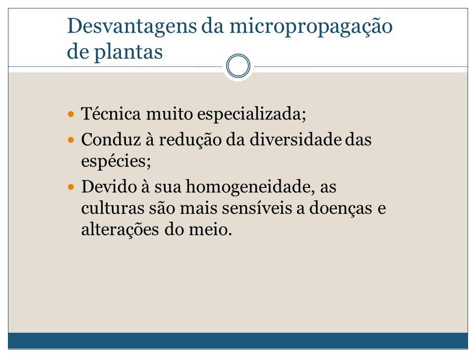 Desvantagens da micropropagação de plantas Técnica muito especializada; Conduz à redução da diversidade das espécies; Devido à sua homogeneidade, as c
