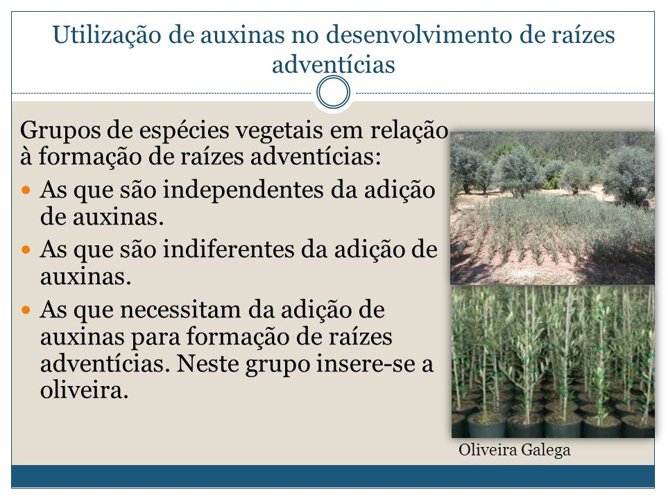 Utilização de auxinas no desenvolvimento de raízes adventícias Grupos de espécies vegetais em relação à formação de raízes adventícias: As que são ind