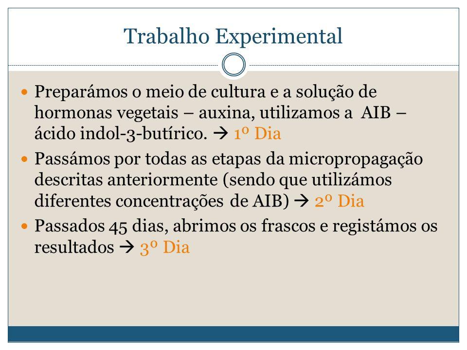 Trabalho Experimental Preparámos o meio de cultura e a solução de hormonas vegetais – auxina, utilizamos a AIB – ácido indol-3-butírico. 1º Dia Passám