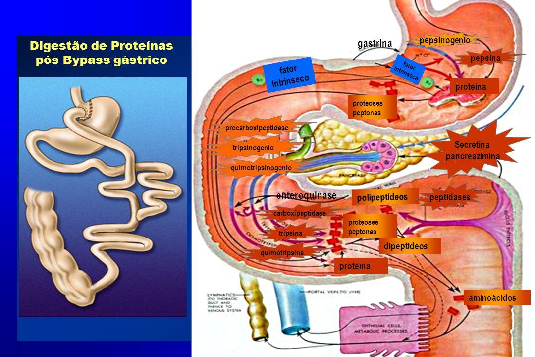 Digestão de Proteínas pós Bypass gástrico aminoácidos dipeptideos proteoses peptonas proteína pepsinogenio pepsina procarboxipeptidase tripsinogenio q