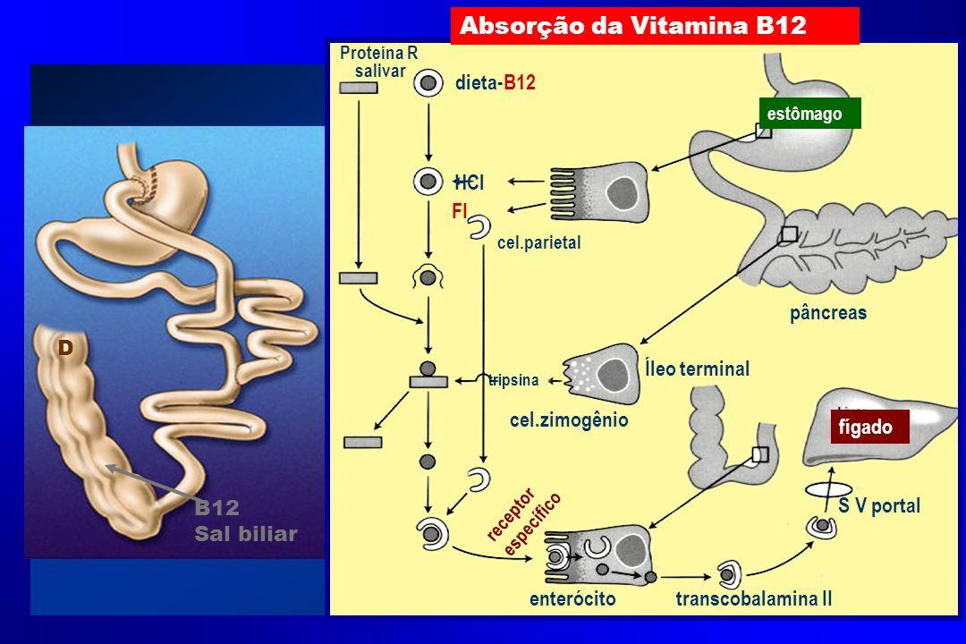 cel.parietal cel.zimogênio enterócito Íleo terminal S V portal transcobalamina II pâncreas Proteína R salivar dieta-B12 HCl FI tripsina receptor espec