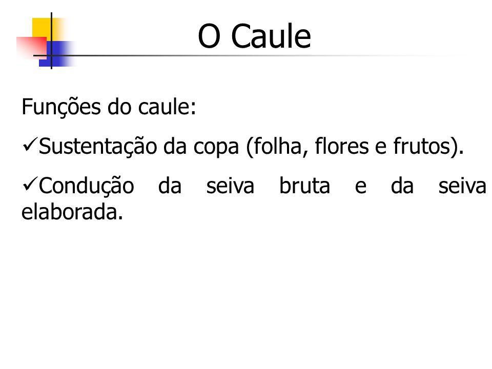O Caule Funções do caule: Sustentação da copa (folha, flores e frutos). Condução da seiva bruta e da seiva elaborada.