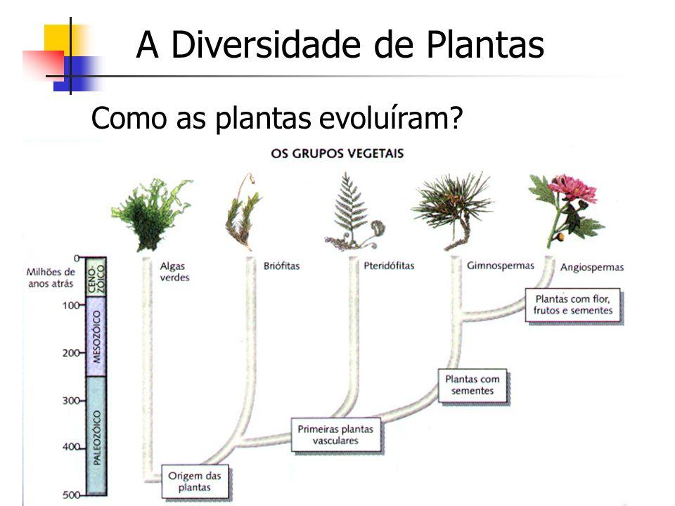 A Diversidade de Plantas Como as plantas evoluíram?